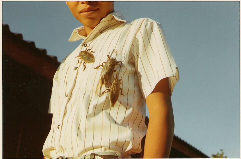 ricebugs.jpg